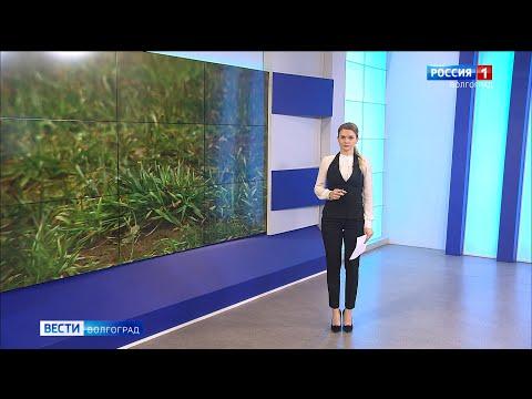 Вести-Волгоград. Выпуск 27.02.20 (17:00)