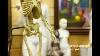 Продолжение лепки скелета - Обучение скульптуре. Фигура, 2 серия