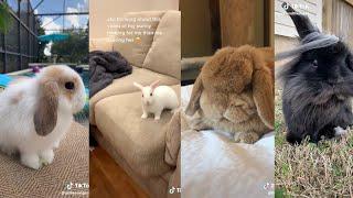 Tik Tok Cute Bunnies -  Tiktok Pets