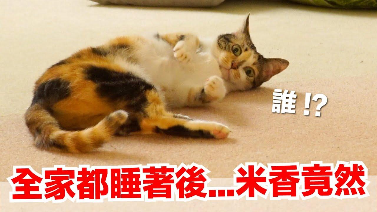【好味小姐】全家都睡著後⋯米香竟然!|好味貓日常EP103