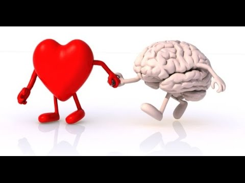 relationship between heart and brain