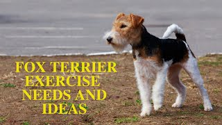 Wire and Smooth Fox Terrier Exercise Guide