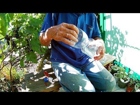 Как защитить виноград от ос.Ловушка для ос из пластиковой бутылки делаем сами