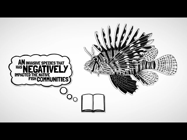 What is a Lionfish and How it Affects the Underwater Environment?
