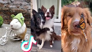 BEST ANIMAL TIKTOKS!! #1