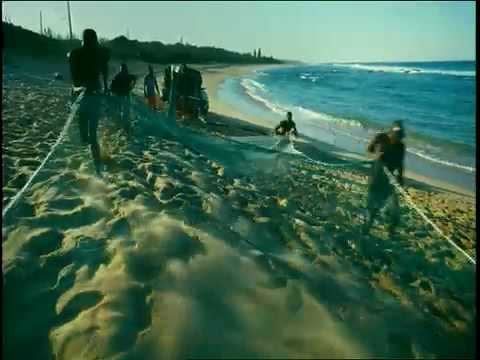 Download WILD OCEAN Film Trailer (IMAX)