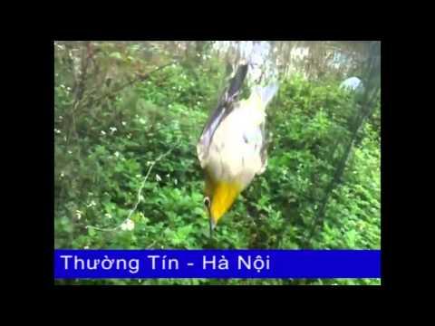 Bán lưới bẫy chim giá rẻ LH: 0974 734 326
