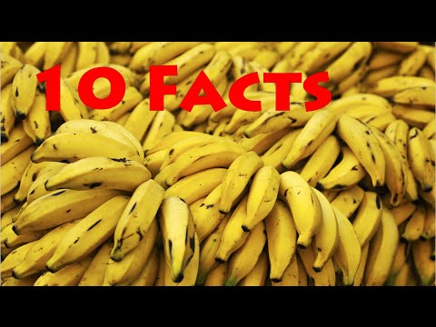 10 Facts About Bananas!