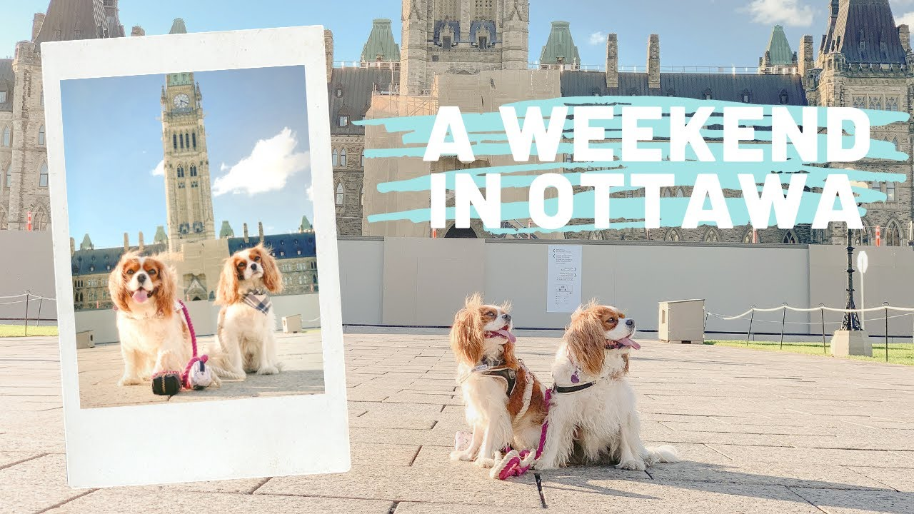 WHAT TO DO IN OTTAWA WITH YOUR DOGS // Dog Friendly Vlog Cavalier King Charles Spaniel