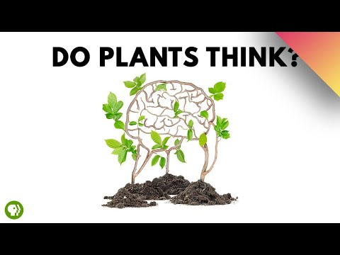Do Plants Think?