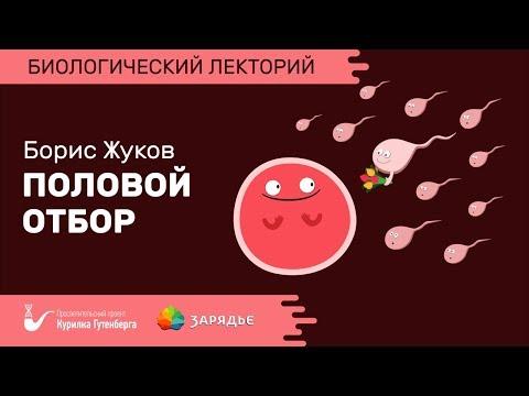 Биолекторий | Половой отбор – Борис Жуков