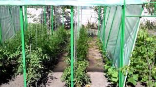 Выращивание помидор. Сад и огород.(Для Вашего сада http://ali.pub/jtc42 Выращивание помидор в теплице. Насколько лучше помидоры себя чувствуют в тепли..., 2015-06-27T10:20:59.000Z)