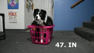 100 Dog Tricks by Luna