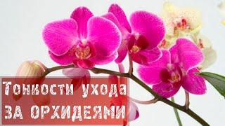 ФАЗЕНДА - 2014.02.02 - Фрагмент 60.
