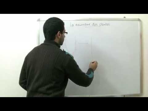 La Biologie - Chapitre 1 - La Nourriture - partie 5 (Poils des racine 2/2) - Abdallah Reda el Sayed