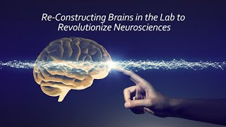 Re-constructing Brains in the Lab to Revolutionize Neuroscience