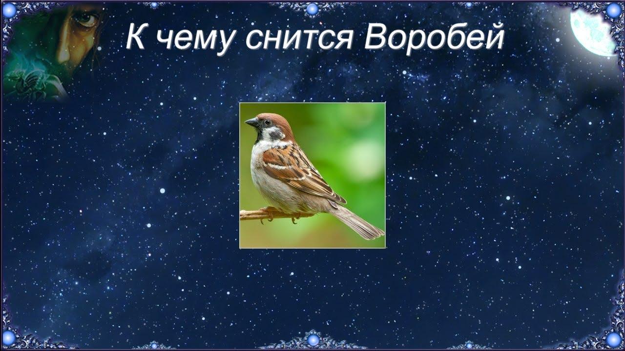 К чему снится Воробей (Сонник)