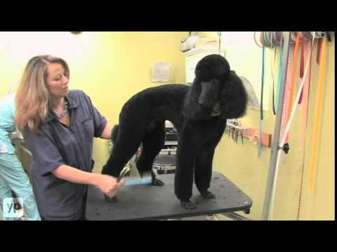 Gainesville - Pet Grooming - Nature's Pet Day Spa