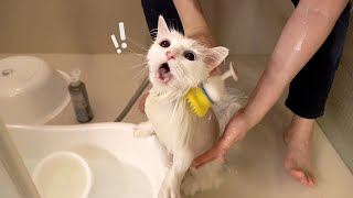 It's LaLa's Turn to Take a Cat Bath! (ENG SUB)