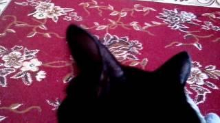 Как ухаживать за кошками . ЧАСТЬ 1