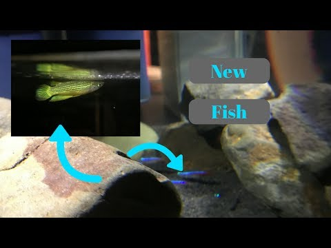 GETTING A KILLIFISH AND NEON TETRAS!!