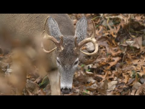 Cheating The Wind For Hunting Whitetails