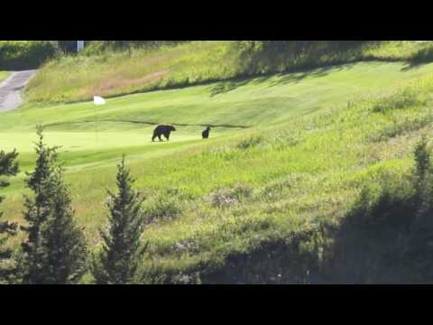 Grizzly Golf - Waterton Lakes Alberta July 2016