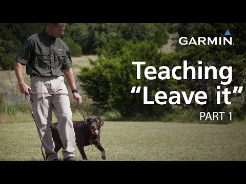 "e-collar-training-with-garmin:-teaching-""leave-it,""-part-1"
