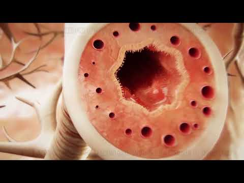 Ренгалин противовоспалительный эффект и бронхолитическое действие