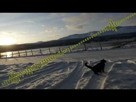 [Noise/Speedcore] PipelineExplosion - My Drugs My Food My Choice P2