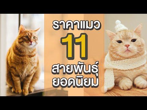 EP8 : ราคาแมว 11 สายพันธุ์ยอดนิยม!!