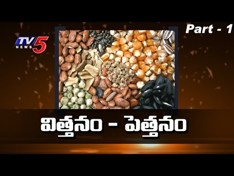 Why Indian Government Allowing Genetically Modified Seeds? | Top Story - 1 | TV5 News