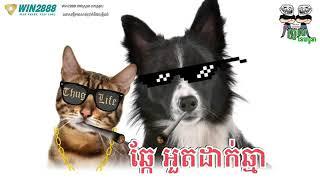ឆ្កែអួតដាក់ឆ្មា video funny by The Troll Cambodia