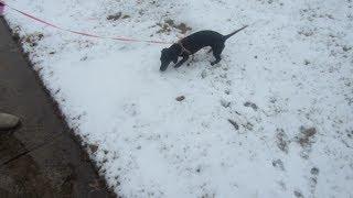 Outdoor Potty Training! - February 6, 2014 - danandkelcieTV Vlog