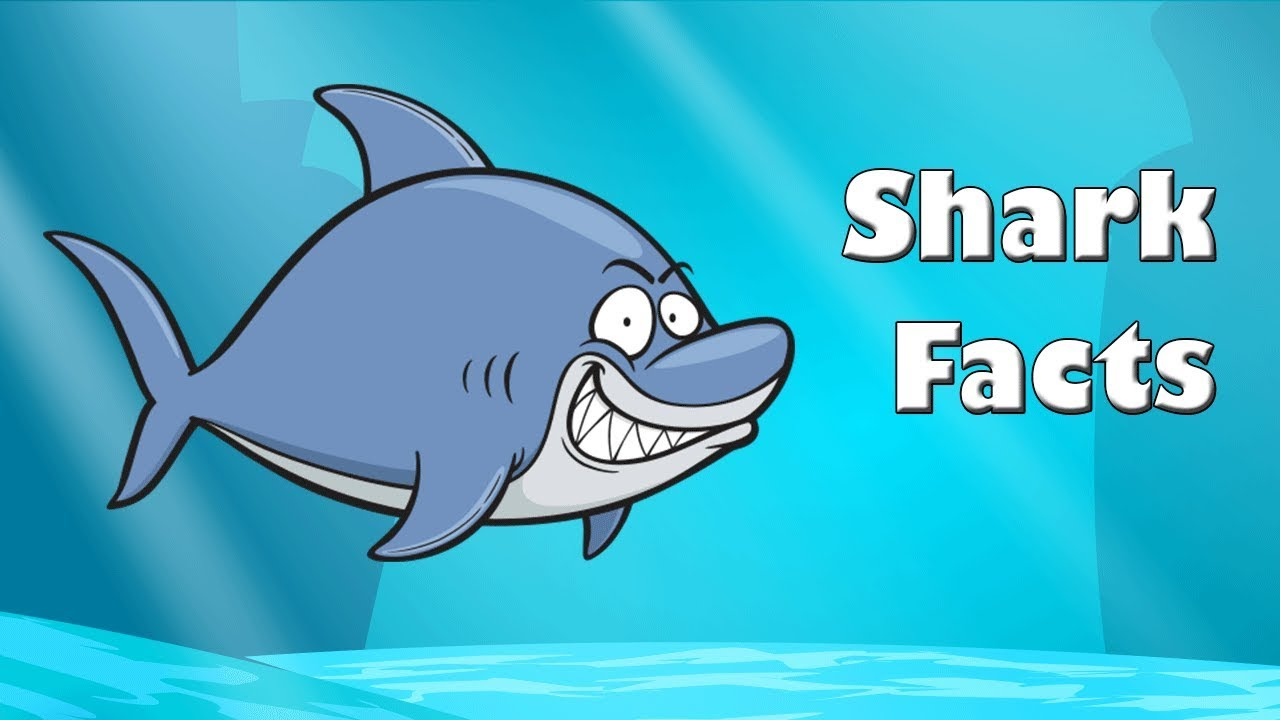 Image of: Pinterest Shark Facts Ocean Animals Animated Youtube Shark Facts Ocean Animals Animated Youtube