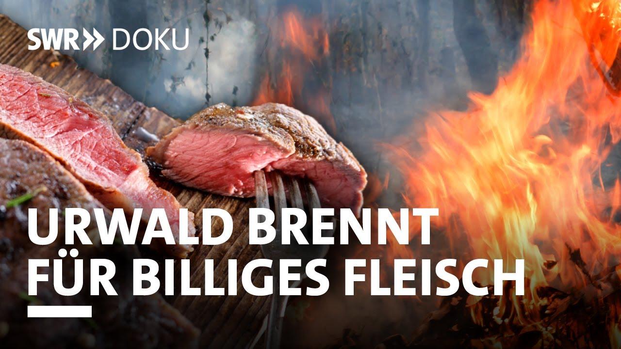 Der Urwald brennt für unser billiges Fleisch