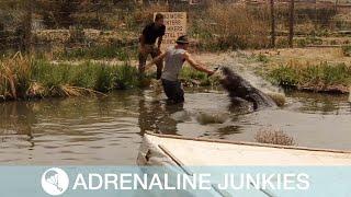 Alligator Almost Bites Off Livestreamer's Hand