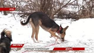 Жители стерилизовать домашних животных по акционной цене