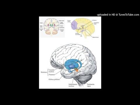 Encephalopsin immunoreactivity in interneurones and striosomes of the striatum