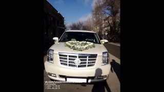 Cadillac Escalade Platinum(Аренда Кадиллака с водителем в Санкт-Петербурге и ближайших городах (в радиусе 300 км). Автомобиль класса..., 2014-10-20T17:40:37.000Z)