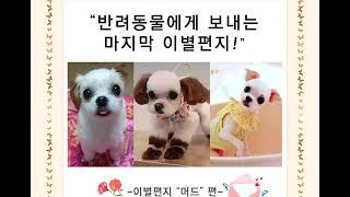 """김해부산 애견화장 펫로스케어 이별편지 """"머드&…"""