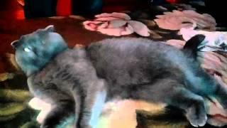 Ржач кошка хочет Котэ, а получает кисточку смотреть всем