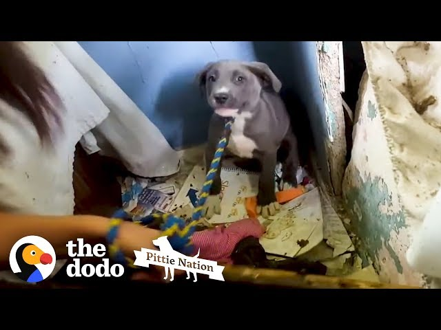 This Dog Is So Nervous Because She Is Protecting Something So Special! | The Dodo Pittie Nation