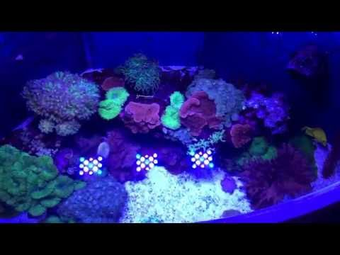 Juwel Trigon 350 Sumped Marine Aquarium Update # 6 Top Down View