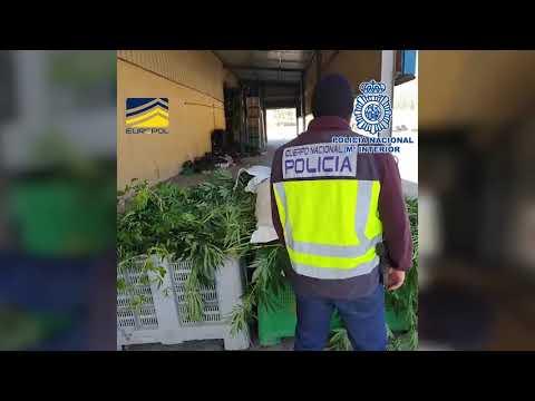 La Policía Nacional desarticula en España una organización multicriminal que operaba desde 2009 en el norte de Europa