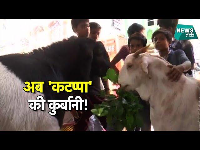 बाहुबली वाला नहीं, बकरीद पर दी जाएगी कोल्ड ड्रिंक पीने वाले कटप्पा की कुर्बानी! | NewsTak