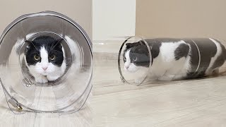 Reducing Transparent Tube for the Cat. Go Through or Get Stuck?