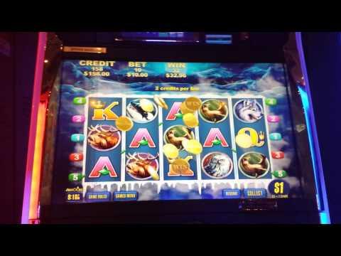 Dollar Bear - $10 bets - BIG WIN MAXBET