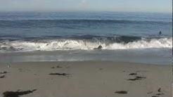Relaxing 3 Hour Video of California Ocean Waves