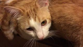 評価&チャンネル登録お願いします♪ 猫, 猫だる, 猫缶, 猫娘, 猫娘 6期, ...